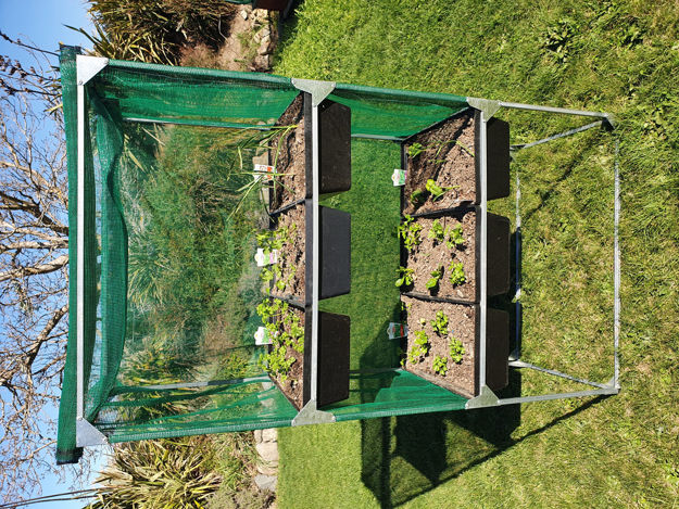 Picture of Vegetable Herb Stand